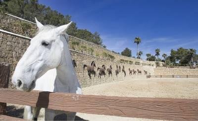 Verkauf Anwesen Sant Antoni de Portmany